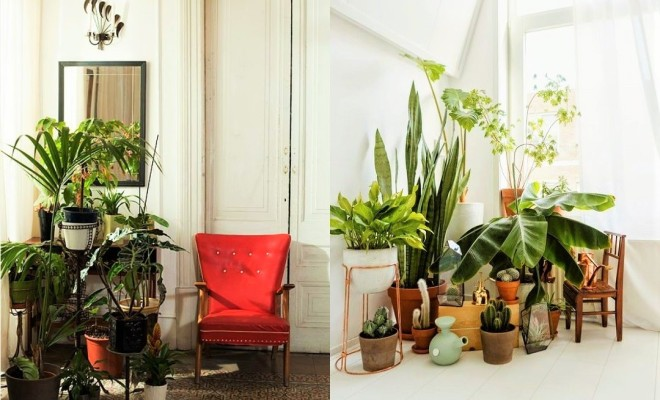 7 different way to indoor plants decoration ideas in living room Ideas to decorate your house