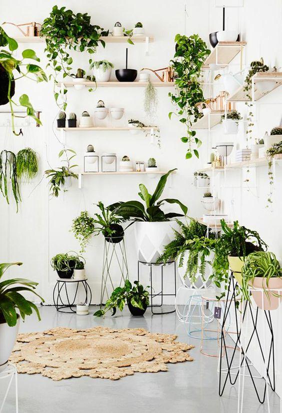 Creative Ways To Display Plants Indoors