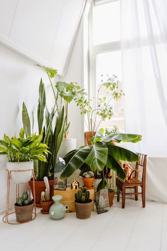 7 different way to indoor plants decoration ideas in for Indoor greenery ideas