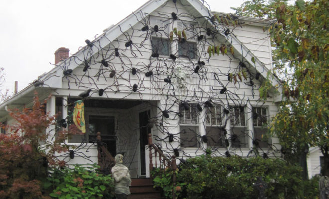 Halloween Decorations Spiders Web To Spook Up Everyone