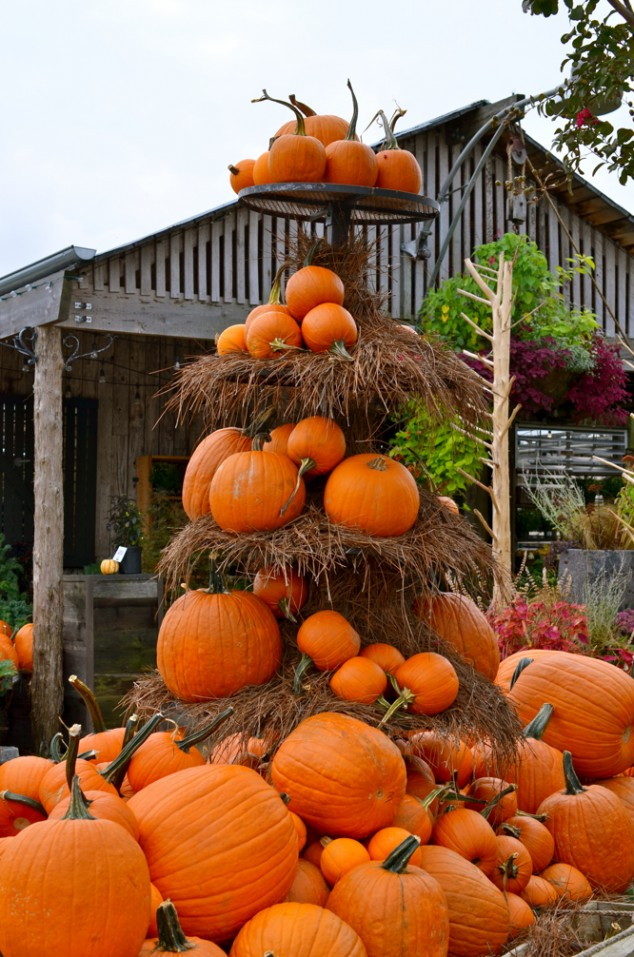 24 Indoor Amp Outdoor Tree Halloween Decorations Ideas