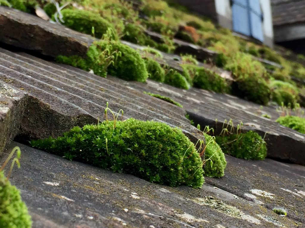 Moss growth on your roof